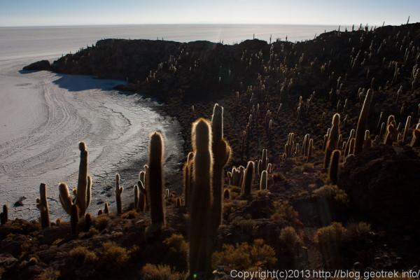 130905ボリビア、ウユニ塩湖、インカワシ島のサボテン2