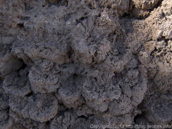 130905ボリビア、ウユニ塩湖、インカワシ島の珊瑚