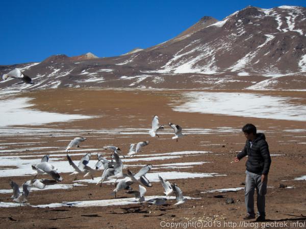 130902アタカマ砂漠、ボリビアのイミグレの鳥