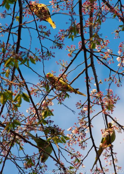 花の蜜を吸うインコ