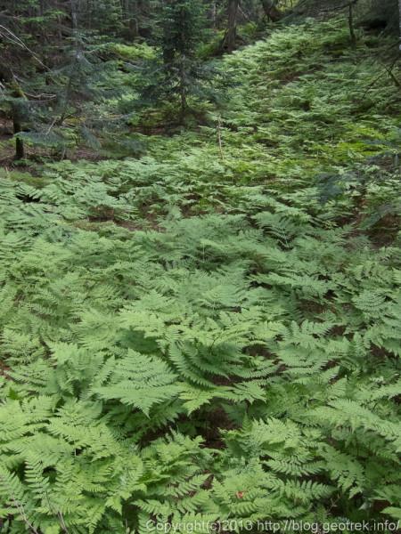 20130811仙塩尾根の樹林