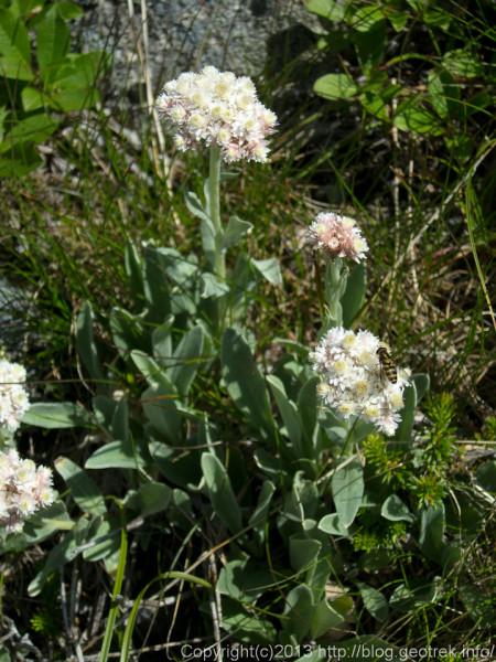 20130812間ノ岳の花と虫