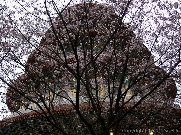120312台北・淡水天元宮、天壇と桜1