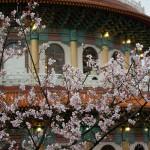 天元宮の桜、北投の温泉~台湾の旅(9)