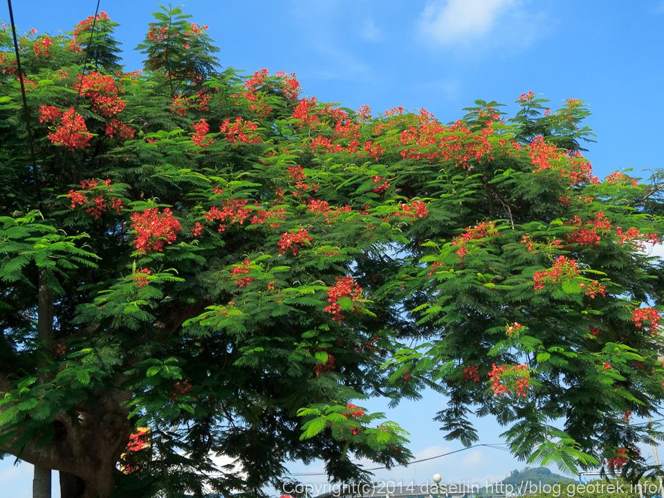 140913台湾、集集の街路樹