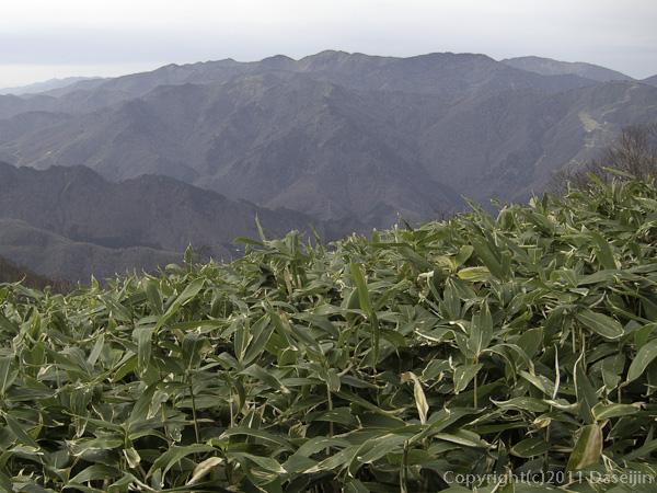 111105谷川岳・大源太山から佐武流山の稜線