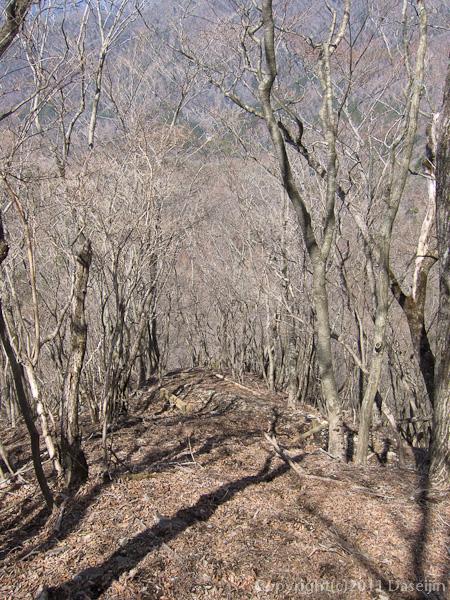 120407丹沢・雨山峠への下り