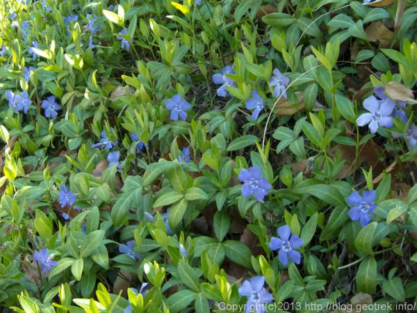 光城山の花