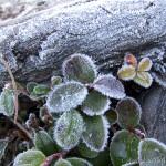 雪を踏んで山頂へ~剱岳・内蔵助谷(2)