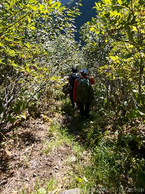 110925内蔵助平への道樹林帯