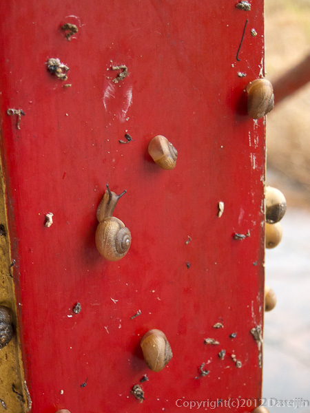 121114ベトナム・フエ宮中のカタツムリ