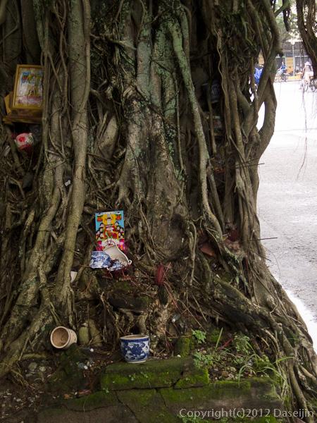 121115ベトナム・街路樹