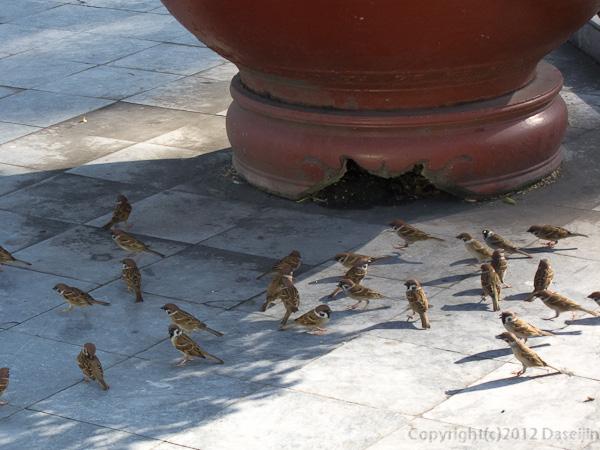 121117ベトナム・サイゴン大教会のすずめ